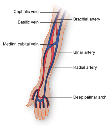 Blood flow through forearm and hand